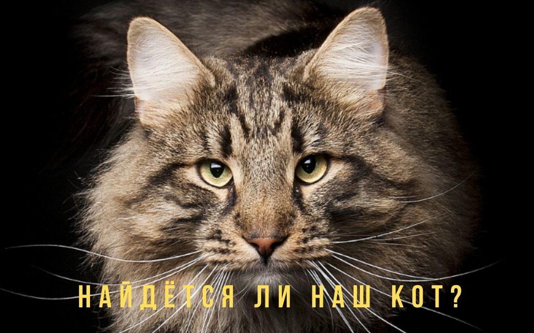 Хорарный вопрос. Найдется ли кот? Пример из практики. ВИДЕО